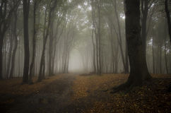 Path in a forest with fog in autumn Royalty Free Stock Images