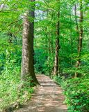 Path Through the Forest royalty free stock photos