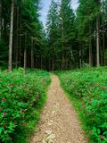 Path in the forest. Or wood stock photo