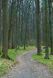 A path is in the forest royalty free stock image