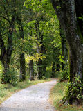 The path into the forest (4) Stock Photography