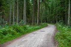 Path in Forest. Green Trees around Stock Photos