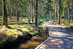 Path in the forest of Harz Stock Image