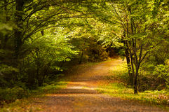 Peaceful Romantic Forest. Horizontal photo of a peaceful autumn path in a romantic love forest or woods. The pathway is covered with fall leaves and the road Stock Images