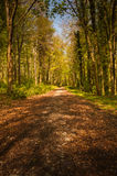 Path in forest, Ireland Royalty Free Stock Photos