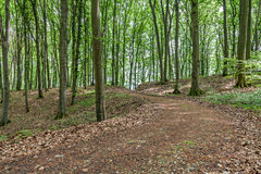 Path through a forest Stock Photography