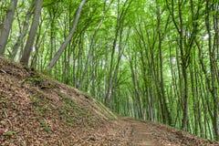 Path through a forest Stock Photos