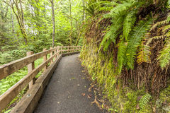 Path in forest. Royalty Free Stock Image