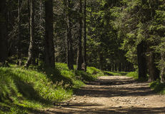Path in a forest Royalty Free Stock Photo