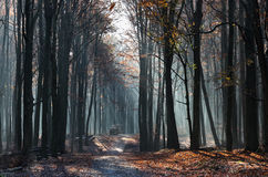 Path in forest. Lights and shadows in the forest in the morning Royalty Free Stock Photos