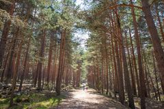 Path in forest with little girl and woman walking. Path in forest with little girl and women walking or hiking in Guadarrama Natural Park Navafria, Segovia stock photos