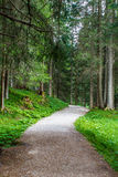Path in a forest Stock Images
