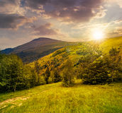 Path through the forest in mountains at sunset Royalty Free Stock Images