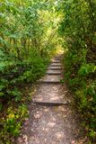 Path in the forest in national park, green trees Stock Images