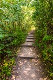 Path in the forest in national park, green trees Royalty Free Stock Image