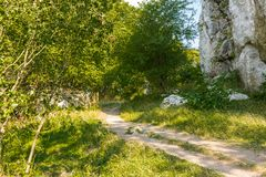 Path in the forest in national park, green trees Royalty Free Stock Images