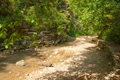 The path from the forest is near mountain stream Royalty Free Stock Images