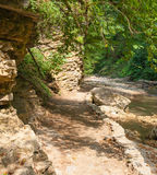 The path from the forest is near mountain stream Stock Photo
