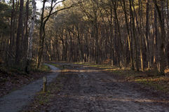 Path in a forest in the netherlands Royalty Free Stock Image