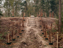 Path in forest between newly planted trees Stock Photo