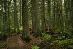 Path through the forest Stock Photos