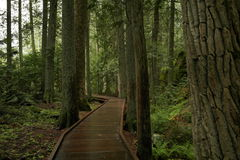 Path through the forest Royalty Free Stock Photo