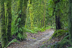 A path through the forest. A path through the Oregon forest in Spring Royalty Free Stock Photo