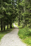 Path in the forest of Paneveggio Royalty Free Stock Image