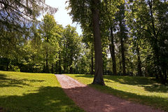 Path in the forest park. Sunny day, summer morning Royalty Free Stock Image