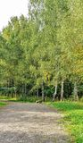 Path in the forest or park. Tree alley Royalty Free Stock Photos