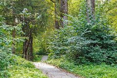 Path in the forest or park. Tree alley Royalty Free Stock Images