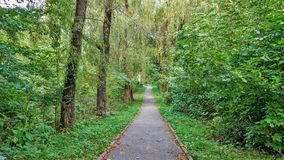 Path in the forest or park. Tree alley Royalty Free Stock Photo