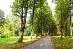 Path in the forest or park. Tree alley Stock Photos