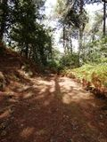 Path of the forest. In autumn day and sunny day stock images