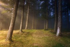 Path in the forest. With sun rays royalty free stock images