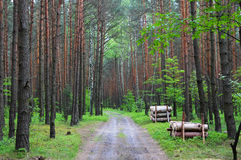 The path among Forest Polish Jura Royalty Free Stock Photo