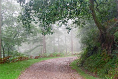 Path in forest with rain and fog Royalty Free Stock Photography