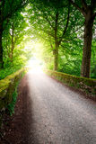 Path in the forest and rays of the sun Royalty Free Stock Photography