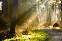Path in forest with rays of sunlight falling on it. Single crushed stone path in tranquil forest with rays of sunlight falling on it and copy space Royalty Free Stock Images