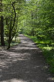 Path in forest with reflections of sun. Path in spring forest with reflections of sun, ideal for walking and cycling royalty free stock photography