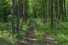Path through the forest. A road going through a forest stock image