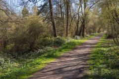 Path In A Forest. Serene Pathway In A Wooded Area By Vancouver royalty free stock photography