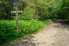 Path in the forest with a sign post royalty free stock photography