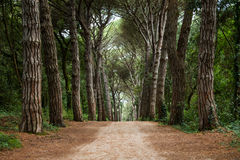 Path in forest. Royalty Free Stock Photo