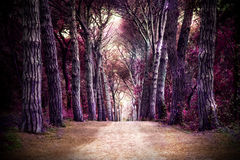 Path in forest. Somewhere in magic wood Royalty Free Stock Images