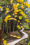 Path in the forest. Splendid path in temperate forest in autumn Stock Photo