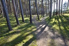 Path in forest in the spring day. Natural background. Environment, ecology Royalty Free Stock Image