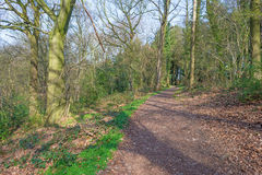 Path through a forest in spring Royalty Free Stock Images