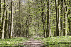 Path in forest in spring Stock Photos