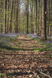 Path in a forest Royalty Free Stock Photography